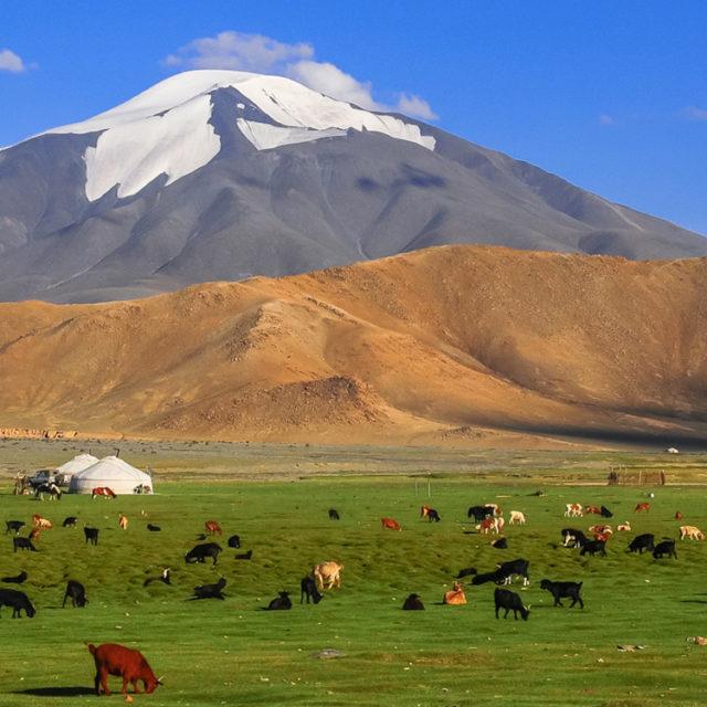 mongolia-holdings